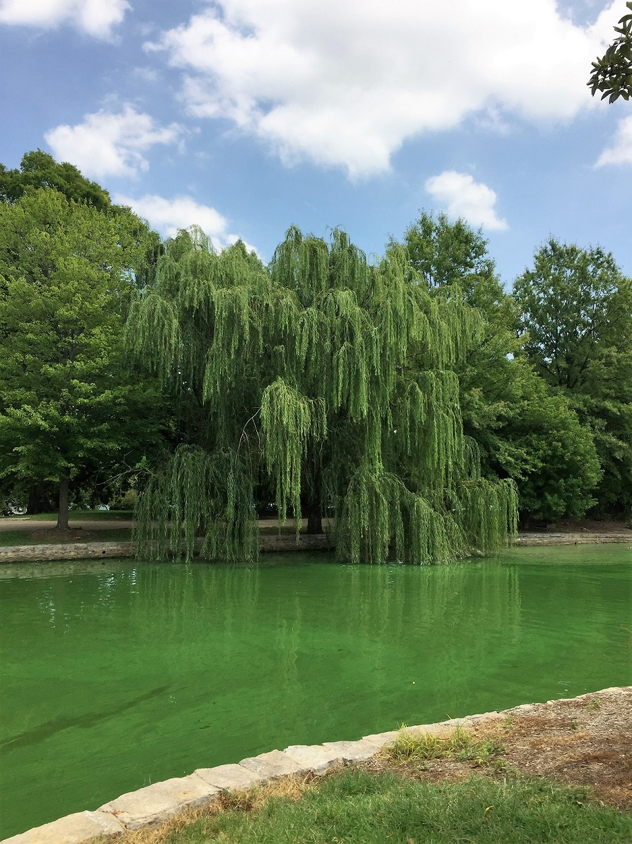 Such green water.